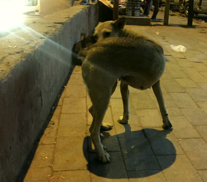 The Dog at the Jahangirpuri Metro Station